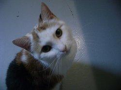 Lola Missie KittyCat Kitty
