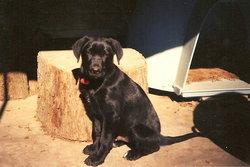 Bear Bryant Dog