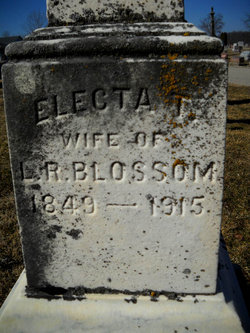 Electa Thankful <i>Sheets</i> Blossom