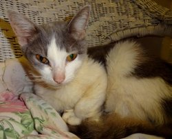 Lillian The Cat