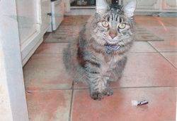 Belle The Cat