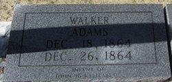 Walker Adams