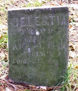 Celestia Tripp