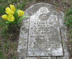 Allice M Boyd