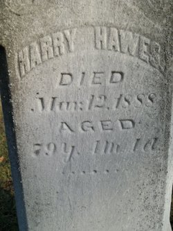 Harry Hawes