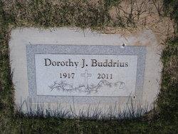 Dorothy J Buddrius