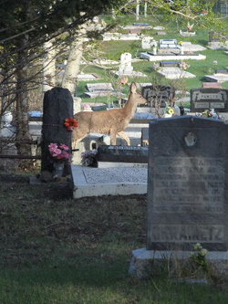 Coleman Union Cemetery