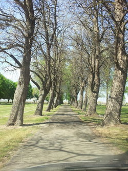 Old Sunnyside Cemetery