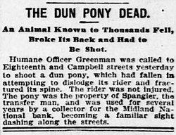 The Dun Pony