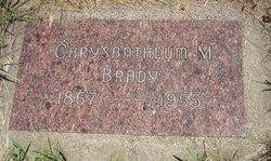 Chrysanthemum <i>Miles</i> Brady