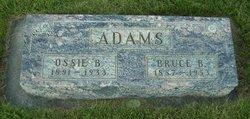 Bruce B Adams