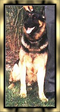 Officer Blitz K-9 Dog