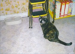 Merlin & Tammy (cats) Sumaliki