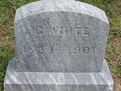 Salem White