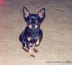 Baby Puppy Wise