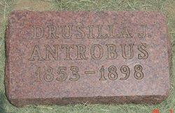 Drusilla J Antrobus