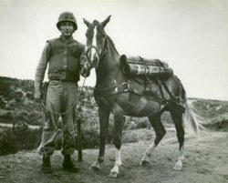 Reckless Korean War Horse