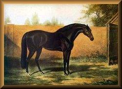 Godolphin Arabian The Horse