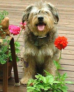 Bruno <i>The Dog</i> Hanson