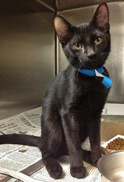 Black TOP~CAT <i>The Cat</i>