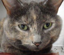 Polly Polly Polly at the Bridge <i>The Cat</i>
