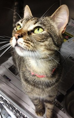 Taraji <i>The Cat</i>