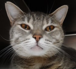 Thunder Cat <i>The Cat</i>