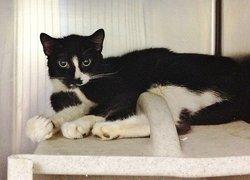 Bea SWEET~KITTY <i>The Cat</i>