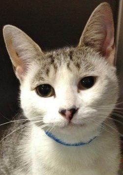 Vinny Long Ears VIN <i>The Cat</i>