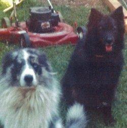Keesha <i>The Dog</i> Hanson