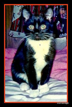 Nay Nay Napoleon <i>The Cat</i> Hecht