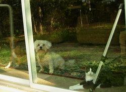 Kitty <i>Benavidez</i> Martinez