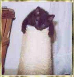 Smut Bachman SmutButt Cat