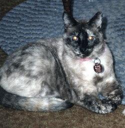 Mysti Su (cat) Suzie