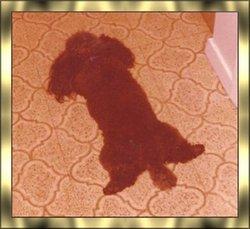 JoJo Stallings Joey Dog