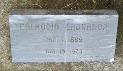 Calaodio Labrador