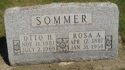 Rosa <i>Rader</i> Sommer