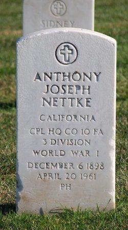 Anthony J Nettke