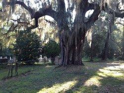 Bird Cemetery
