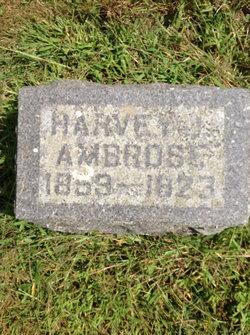 Harvey J Ambrose