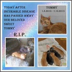 Tommy Tom�ko ♥