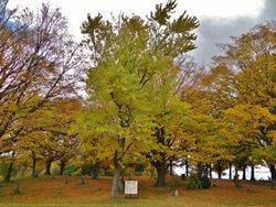 Round Lake Cemetery