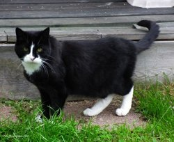 Scamper Butterfield Cat