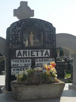 Rose <i>Mazzafero</i> Arietta