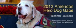 Sgt Gabe The Hero Dog