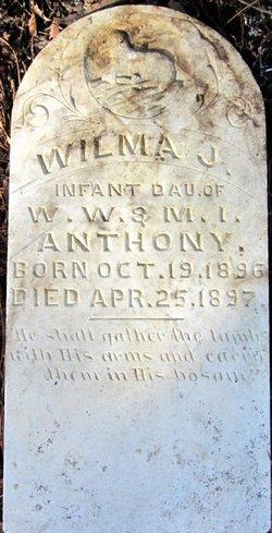 Wilma J Anthony