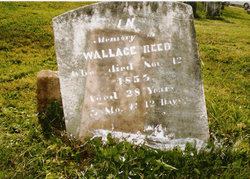 Wallace Reed