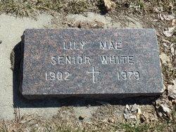 Lily Mae <i>Senior</i> White