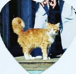 Biddie Cat Hecht