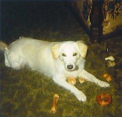 Sam (dog) Sumaliki